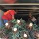 Profepa regresa más de 2 mil árboles de navidad provenientes de EEUU, traían plaga