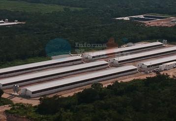 Semarnat rechaza seis proyectos porcícolas en Yucatán