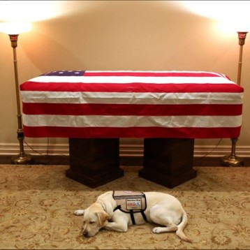 Él es Sully, el perro que asistió al funeral de George Bush padre