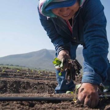 Eres horticultor, Canadá te busca y te pagará 62,000 pesos mensuales