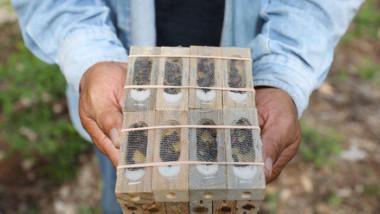 Apicultores yucatecos reciben abejas reinas