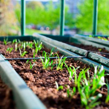Huertos urbanos: herramienta para fortalecer la economía y el desarrollo sustentable