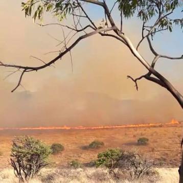 Pepe Aguilar muestra los estragos que dejó incendio en su propiedad