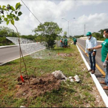 Plantados más de 16 mil árboles en Mérida y comisarías