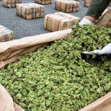 Si se legaliza la mariguana, se va a tener que gravar con IEPS: Arturo Herrera