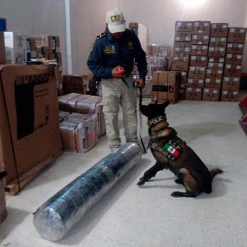 """Agente canino """"Ringo"""" descubrió 33 kilos de marihuana"""