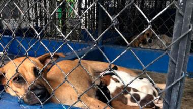 En dos meses, CEMCA recibe 56 denuncias por maltrato animal