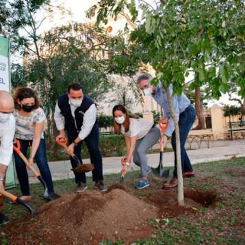 Plantan el árbol número cien mil en Mérida
