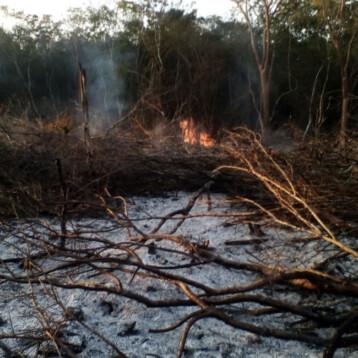 Vandalizan terrenos reforestados en Chocholá