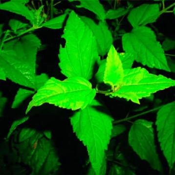 CICY revalora su colección de plantas medicinales