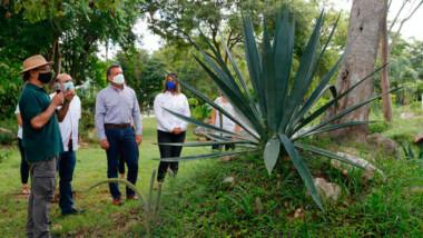 Apuestan a la recuperación de especies como el agave en Parques de Mérida
