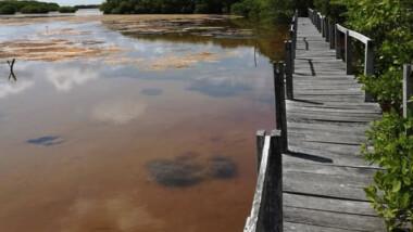 """Yucatán """"en amarillo"""" por afectaciones a los manglares"""