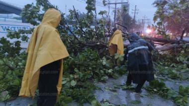 Sistemas de alerta temprana salvan vidas hasta en una tormenta tropical